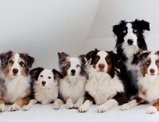 Die Therapiehunde von Kinderschutzengel e.V. besuchen regelmäßig Kinder in Krankenhäuser
