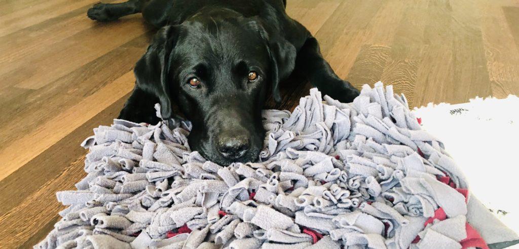 Balu kann es nicht kaum erwarten seine Nase in den Teppich zu stecken